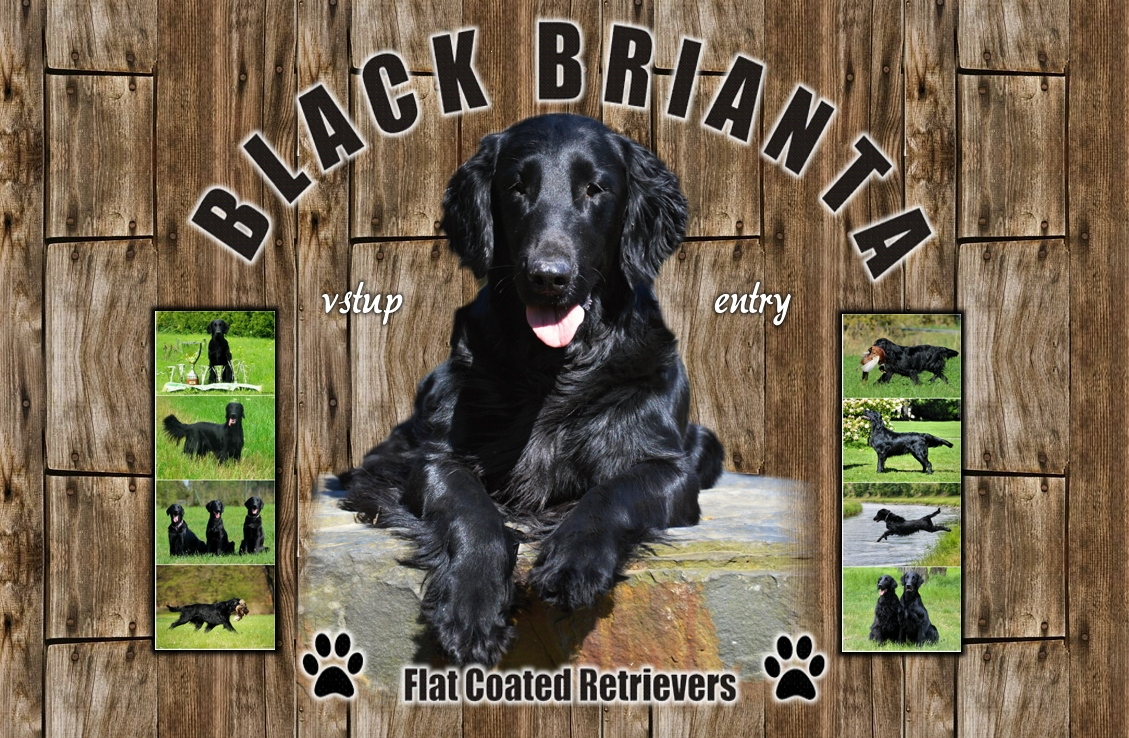 Welcome to BLACK BRIANTA FCR's